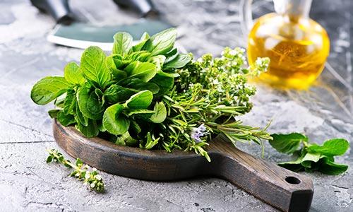 Taller de plantas aromáticas y medicinales