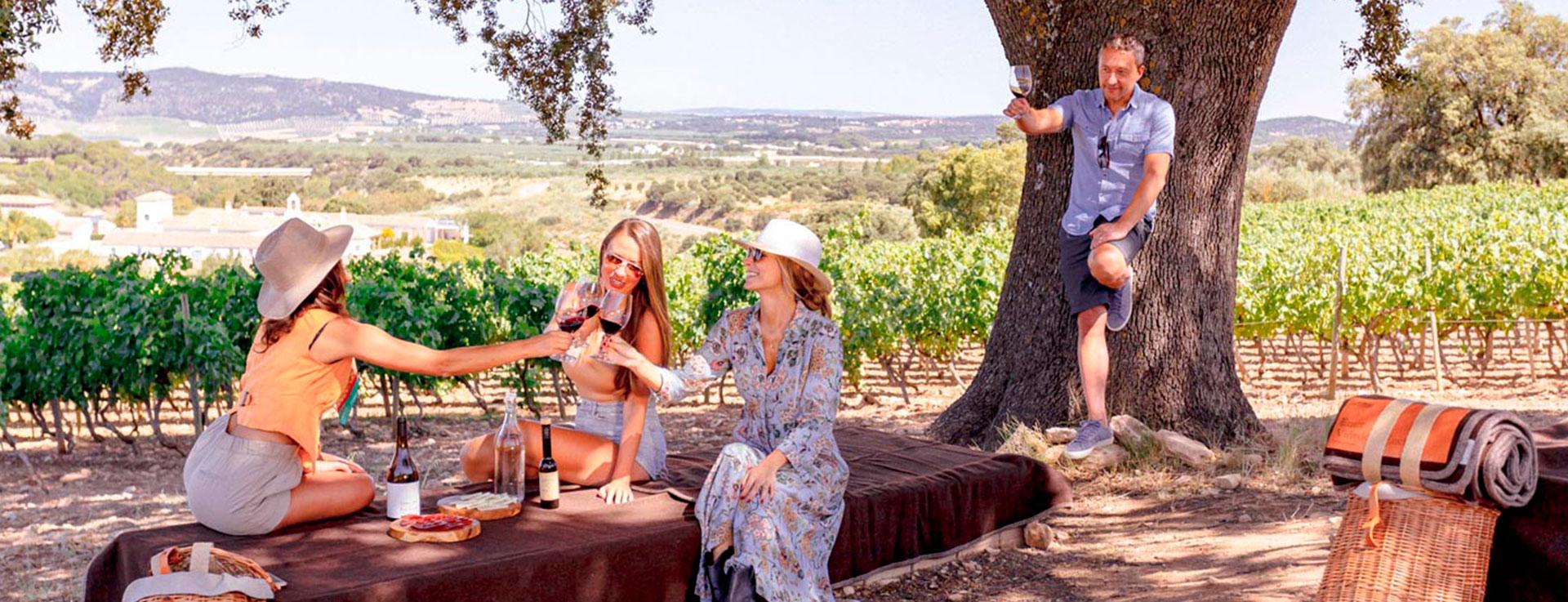 The wine harvest of Ronda
